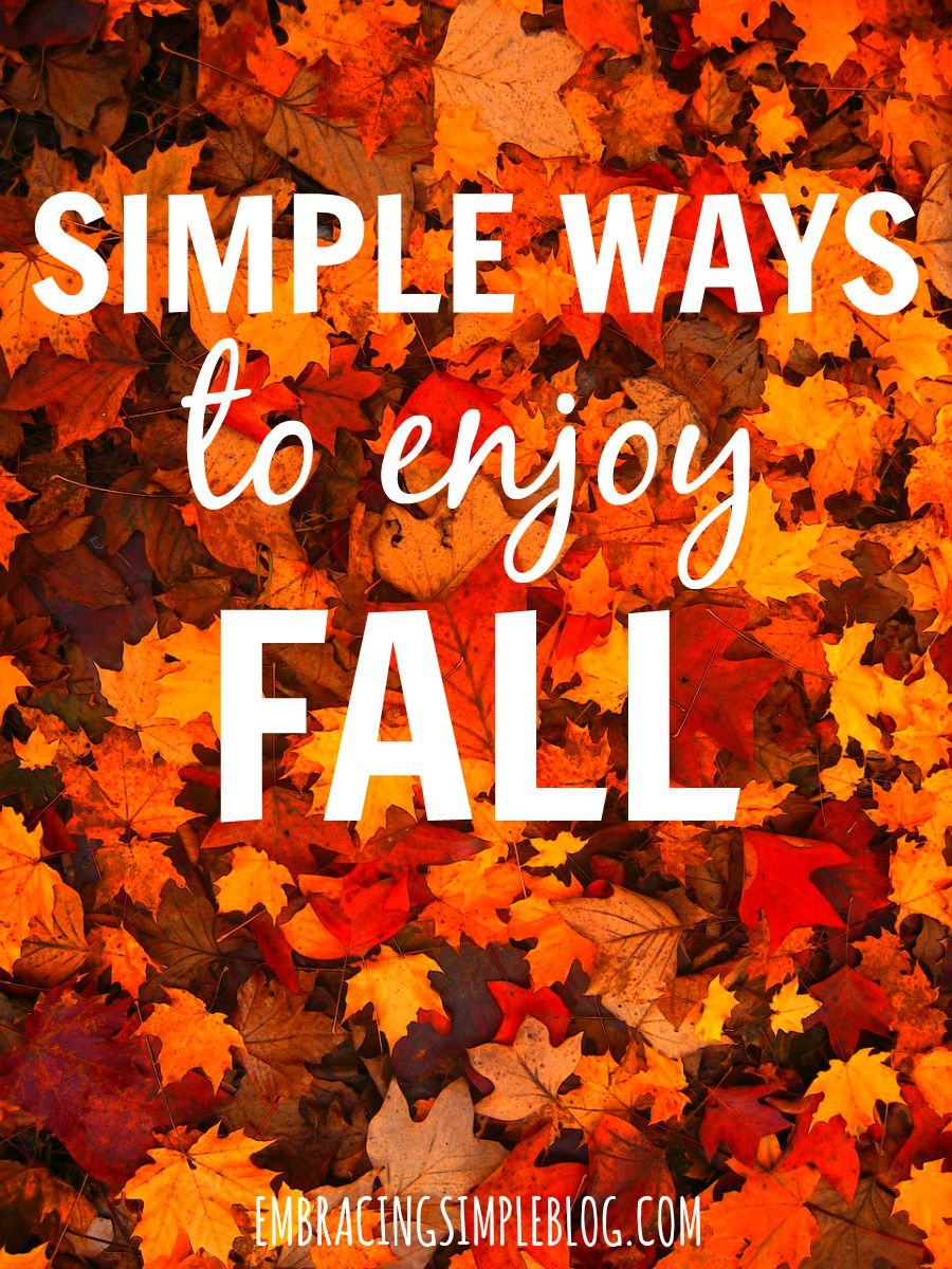Looking for inexpensive ways to have fun this fall? Check out this great list of simple ways to enjoy fall. This will inspire you to create fall traditions of your own that you'll look forward to year after year!